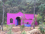 El Bosque - Purple Casita (photo by Brian)