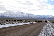 Whitehorse Ranch Road - Cows Crossing Road