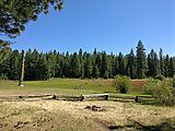 Deschutes National Forest - Oregon - Grass