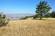 20170719 090745 P76K7 N0448734W1196644 - OR - Eclipse Research - Umatilla NF - Camp 160 - Tamarack Mountain - Viewpoint