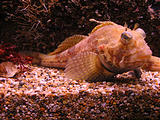 Newport Oregon Coast Aquarium (October 19, 2004 11:50 AM)
