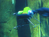 Newport Oregon Coast Aquarium Remote Control Camera Submarine in Fish Tank (October 19, 2004 2:23 PM)