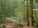 Drift Creek Falls Suspension Bridge (October 20, 2004 3:00 PM)