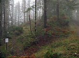 Tillamook State Forest Motorcycle Trail (October 22, 2004 11:16 AM)
