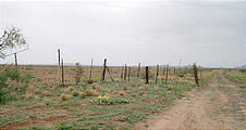 barbed wire fence and track along the U.S./Mexico border (8/08 9:51 AM)