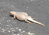 Death Valley - Badwater - Chuckwalla (May 28, 2006 3:13 PM)