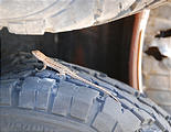 Utah - Crater Island - Tungsten Mill - Small Lizard on Tire