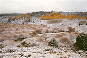 Reservation Ridge - Snow - Aspens