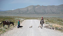Pony Express Trail - Sheep - Shepherd - Sheep Dog