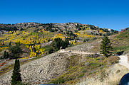 Willard Mountain - Road - Black Mountain - Aspen Trees