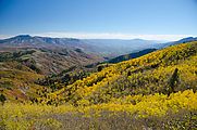 Willard Mountain - Road - Aspen Trees