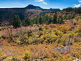 South Elk Ridge - Trees - Fall Colors - Oak