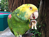 Puerto Morelos - Crococun Zoo - Parrot (Photo by Laura)