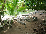 Puerto Morelos - Crococun Zoo - Crocodiles (Photo by Laura)